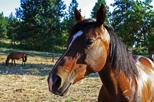 Tami's horses