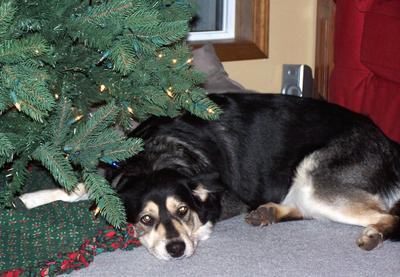 Buddys_christmas_2