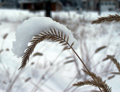 Snow_and_grass_2_copy_2