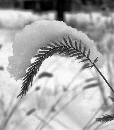 Snow_and_grass_2bw