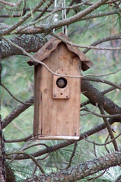 Bird_in_nest